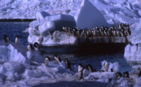 Penguins massed at ice edge ready to dive near Cape Crozier
