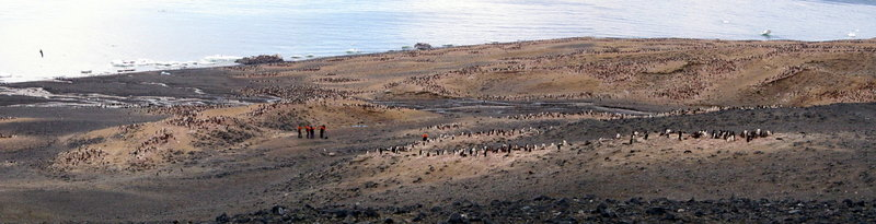 panorama of Cape Bird North Colony